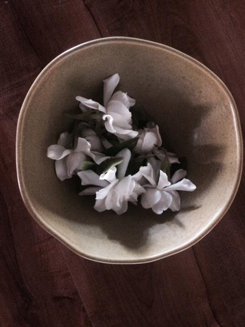 GardeniaFullSizeRender-8